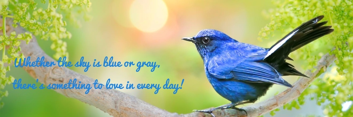 Whether the sky is blue or gray,  there's something to love in every day!