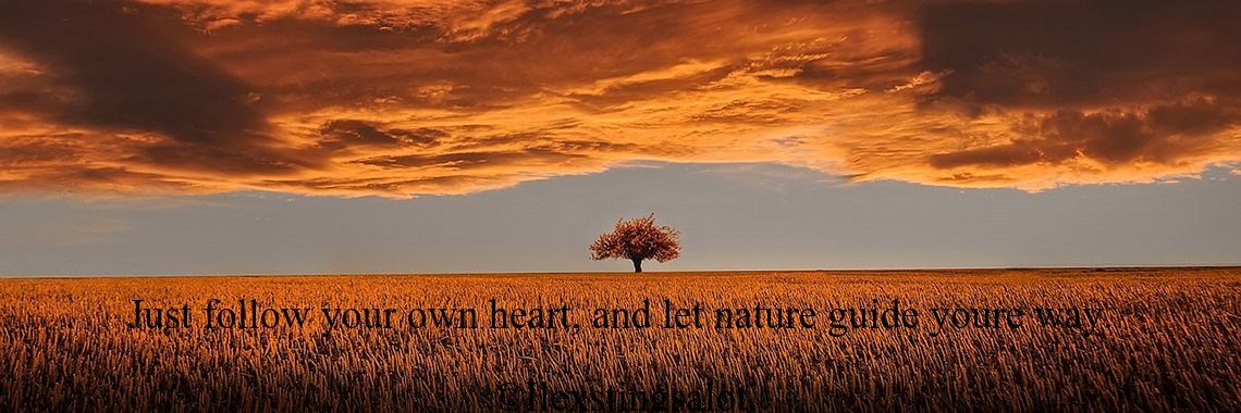 Just follow your own heart, and let nature guide youre way.                                             ©Ilexstingsalot.