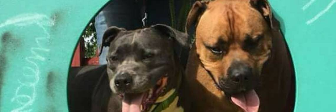 AMSTAFF AND BUDDY's - GELE LINTJES SYSTEEM