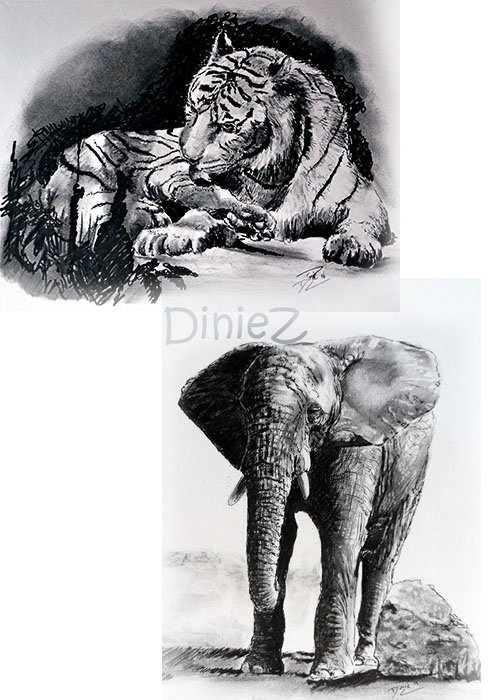 Workshop Tijger of olifant tekenen met houtskool en fineliners