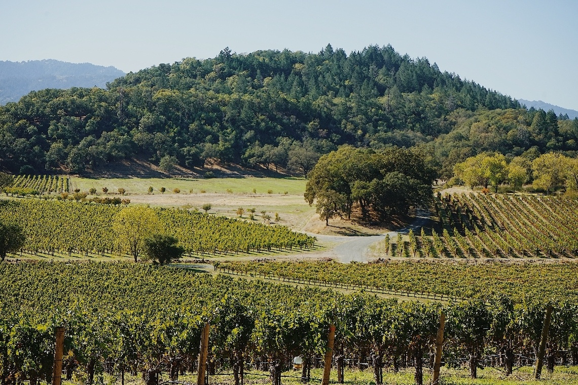 The famous Napa wine valley